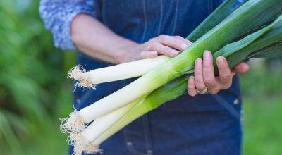 5 motivos para incluir o alho-poró na sua alimentação