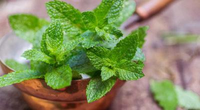 Hortelã: confira 7 benefícios dessa planta tão refrescante