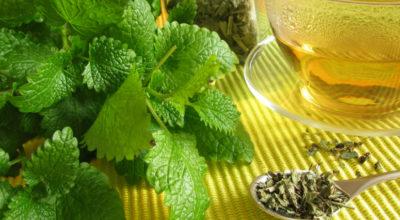 Erva-cidreira: saiba por que ela faz bem para a sua saúde
