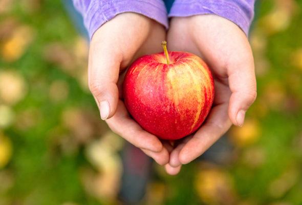 Maçã: conheça os benefícios dessa fruta que faz bem para o coração