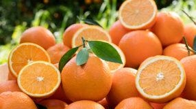 Benefícios da laranja: 9 poderes dessa popular fruta