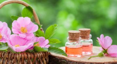Óleo de rosa mosqueta: conheça os benefícios desse óleo secular